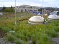 Watch Ballard Library Vegetated Roof Thumbnail