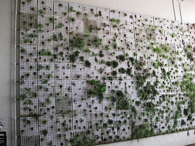 Green Building Louisville Living Wall