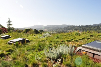 Mill Valley Hillside Veg Roof