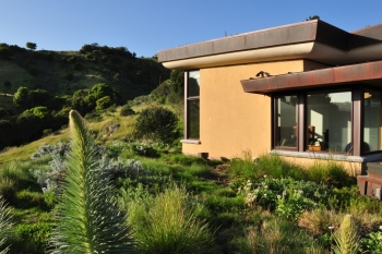 Mill Valley Planted Roof