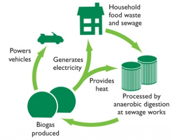 Bio Bug Fuel Process Diagram