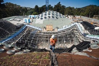 California Academy of Sciences Construction Worker