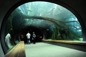 California Academy of Sciences Aquatic (USA)