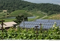 Shafer Solar Vineyard
