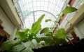 Gardens under Glass Cleveland Plants