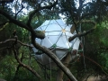 Treehouse O2 Geodesic