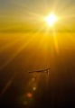 Solar Impulse in the Sun
