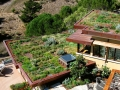Mill Valley Veg Roof from Above