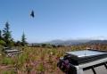 Mill Valley Hillside Veg Roof Bird