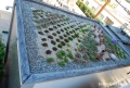 Helios House Vegetated Roof