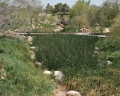 Desert Living Center Constructed Wetlands