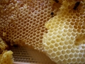 Bee Honeycomb Structure