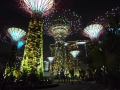 Gardens by the Bay Solar Supertrees Night