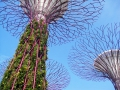 Gardens by the Bay Solar Supertree