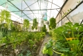Finca Rosa Blanca Greenhouse Plants