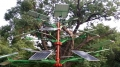 Solar Power Tree India